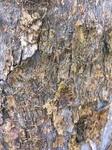 wood skin.JPG