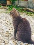a cat.jpg