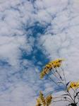sky flower.jpg