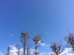 sky wood.JPG