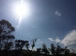 sun woods.JPG
